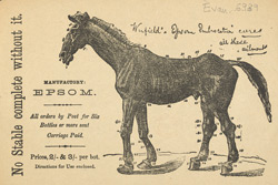 Advert For Epsom Embrocation, Horse Medicine
